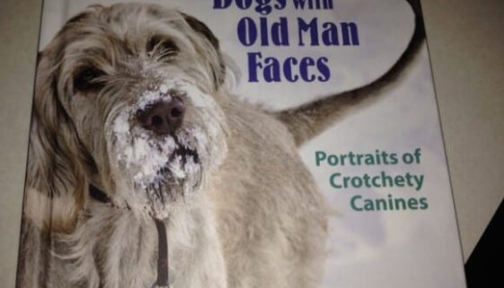 dogs with old man faces