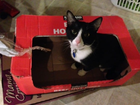 bella in a box, Pet Sitters NOt To Hire, How To Hire A Pet Sitter, Cat, Cats, Kitties, Kitten, Dana Vento, Travel, vacation