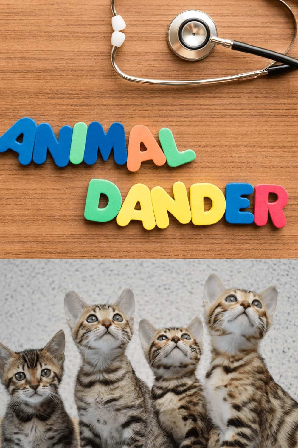 pet dander with cats