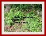 herbs herb gardens, thyme, basil, oregano, mint, spearmint, basil, lemon balm, chive, garden, low maintenance, lavender, gloves, dana vento, pittsburgh frugal mom