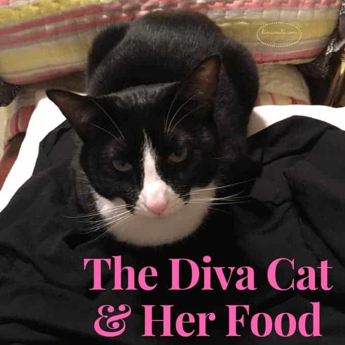 """Small Milano Bowl """"Diva Zebra"""", cat bowl, separate pieces, bowls for cats, dining areas for kittens, milk, food, animals, pets, 2 piece bowl, dana vento, bella, BFF Food, gluten free, grain free, wet food, packets, cans, good eats, cats eat, rescue cat, cat post, cat, cats, felines, rescue kitty, feed them well, diva cat, bella the cat, bella is a diva, eatin well, The Diva Cat & Her Food"""