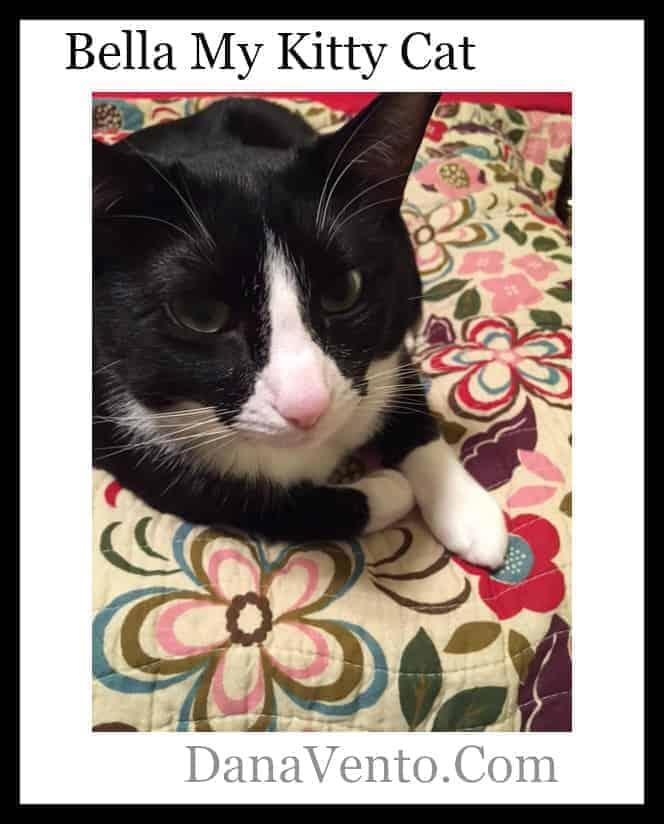 My Kitty Bella And Cleaning , kitty, dana vento, cats, kittens, kitten, cat, kitty cat, tuxedo cat, fur friend, furry friend, animal, house animal, house cat, pet, pets, my baby