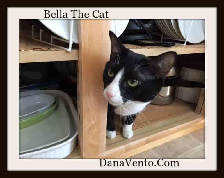 My Kitty Bella And Cleaning , kitty, dana vento,