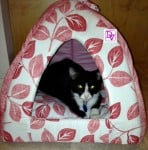 a cat tent, kittens, pets, tents, hiding spot, fur babies, pets, dana vento, small dogs, online purchase, home,