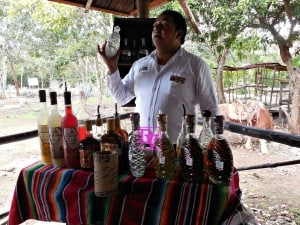 Tequila Factory Tour In Cozumel, tourism, cozumel, travel, travel blogger, vaction, family destination, dana vento, tours plaza, agave, mayan village,