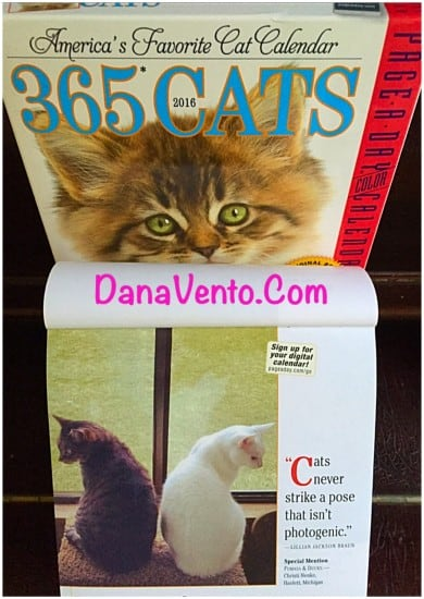 HOW TO, how to celebrate, how to celebrate national cat day, cats, felines, kittens, purr, meow, cat, tuxedo cat, bella the cat, pets, furry, hair balls, dana vento, crazy cat lady, mugs, stickers, books, calendars, ad