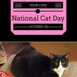 How To Celebrate National Cat Day