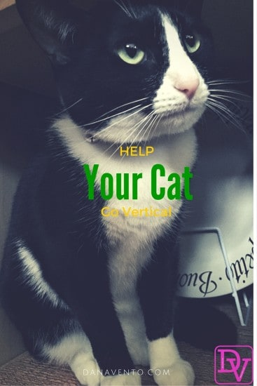 cat, kitty, kitty cat, climber, fibrrous, sisal, spring-laided hinges, carpeted platforms, scratching, multi-level, climb to nowhere, natural play, cat climber, smartcat, smart products for smart cats, how to help your cat go vertical
