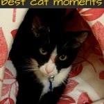 2015, meow mix, meow mix moments, best cat moments, best cat, irresistible moments, cats, bella the cat, morris the cat, ad, dana vento, tuxedo cats, cat awards, ad