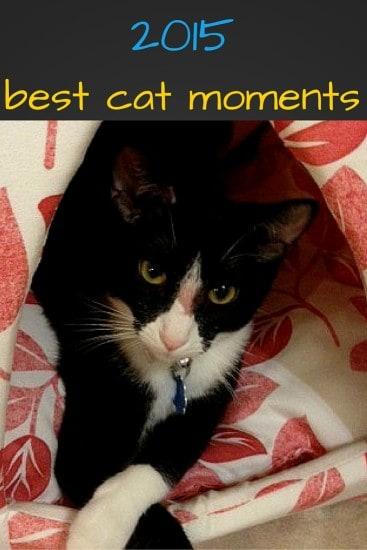2015, meow mix, meow mix moments, best cat moments, best cat, irresistible moments, cats, bella the cat, morris the cat, ad, dana vento, tuxedo cats, cat awards, ad