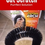 cat, cat scratcher, attach, bristle, bristle arch, catnip, carpet, kitty, cat, kitty cats, tuxedo cat, bella thecat, ad