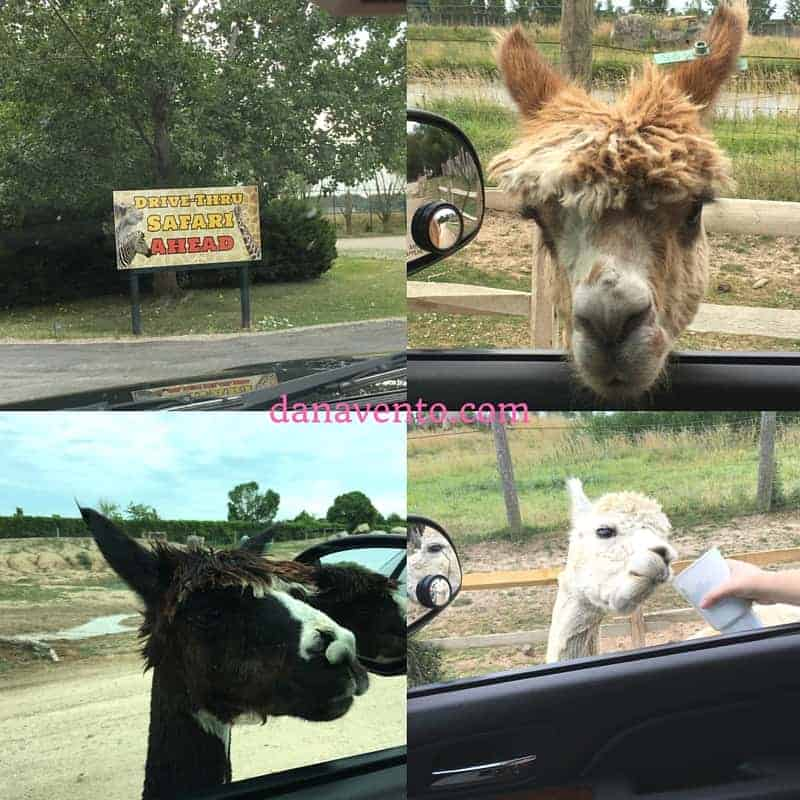 African Safari Wildlife Park in Port Clinton of Lake Erie Shores and Island Adventures