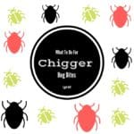What To Do For Chigger Bug Bites