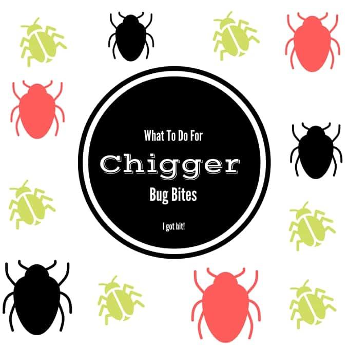 Chigger Bug Bites Suck