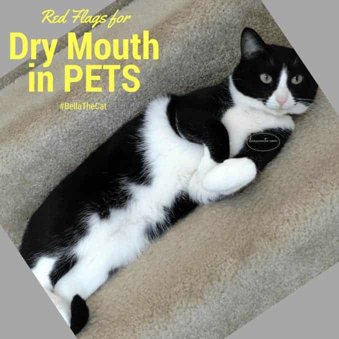 Do You Know These Dry Mouth Red Flags For Pets?