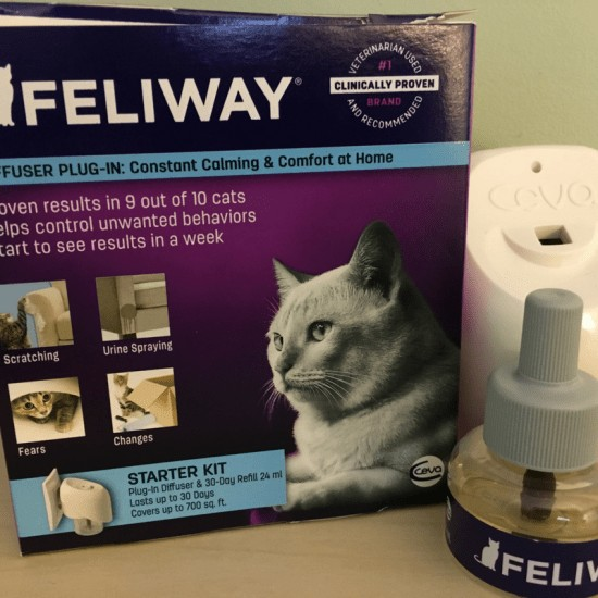 3 Tips For Cats, Fleas and Pheromones