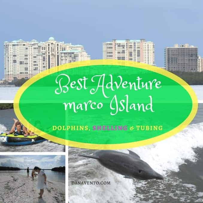 Best Dolphin, Shelling and Tubing Adventure In Marco Island