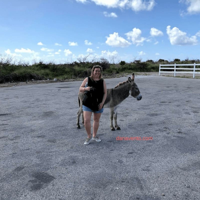 Discover Grand Turk photo with donkey be careful