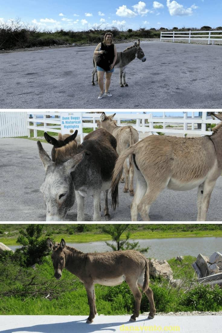 Discover Grand Turk + wild donkeys