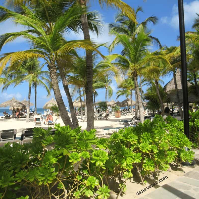 Barcelo Aruba Gardens Palm Beach Why Book Direct. To see this!