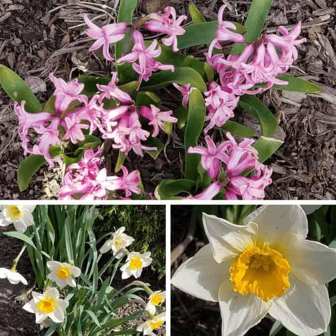 Outdoor garden beds with flowers