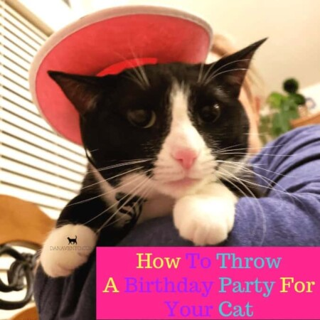 How To Throw A Birthday Party For Your Cat , BELLA, CATS, KITTIES, PARTIES, CELEBRATIONS, HOW TO, DIY, WHAT TO DO FOR A CAT PARTY, CAT THEME, BIRTHDAY FUN, ADULTS, HUMANS, PETS, PLATES, NAPKINS, MICE, PRESENT, SALMON, FUN FOR ALL, DIY CAT PARTY,