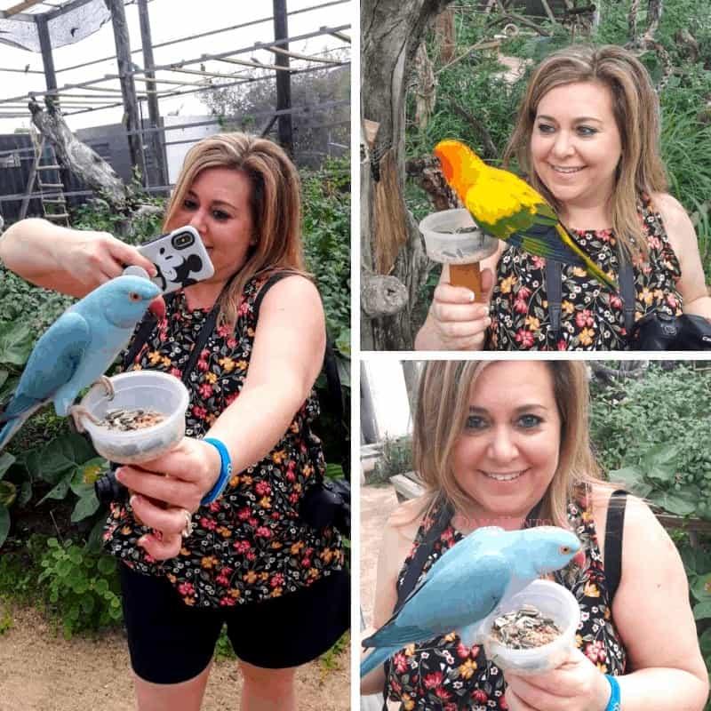 Sint Maarten Bird Sanctuary - Dana with birds on cup of life
