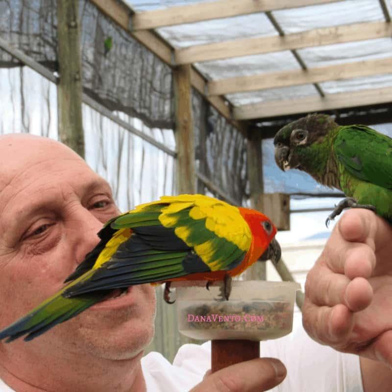 Sint Maarten bird sanctuary Man Appreciating Birds