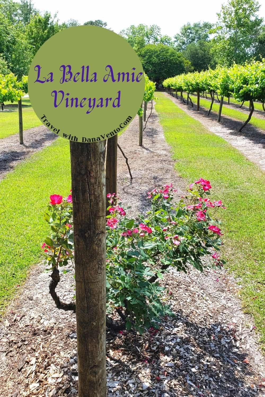 La Bella Amie Vineyard in Myrtle Beach