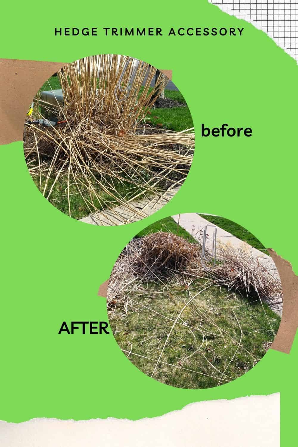 BEFORE AND AFTER hedge trimmer