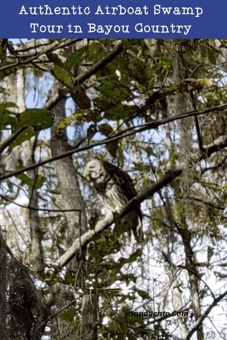 swamp tour in Bayou Country Seeing an OWL