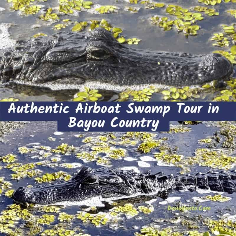 swamp boat tour in Bayou Country The Alligators