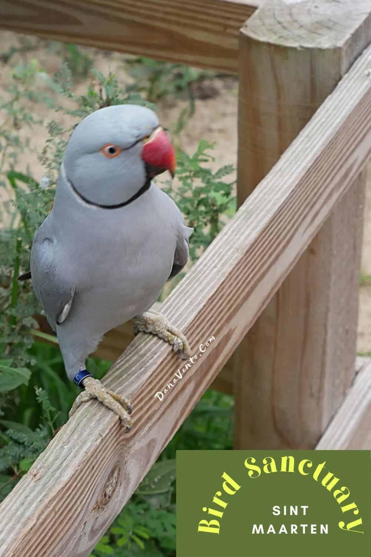 Sint Maarten Bird Sanctuary Blue Bird