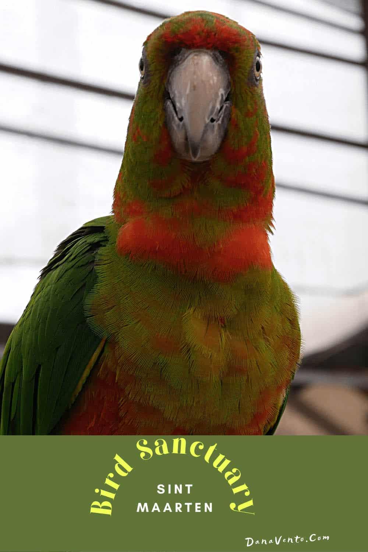 Sint Maarten Bird Sanctuary parrot