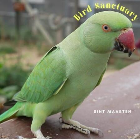 green bird Sint Maarten Bird Sanctuary
