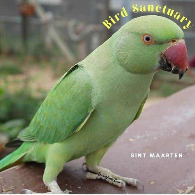Fabulous Bird Sanctuary In St. Maarten