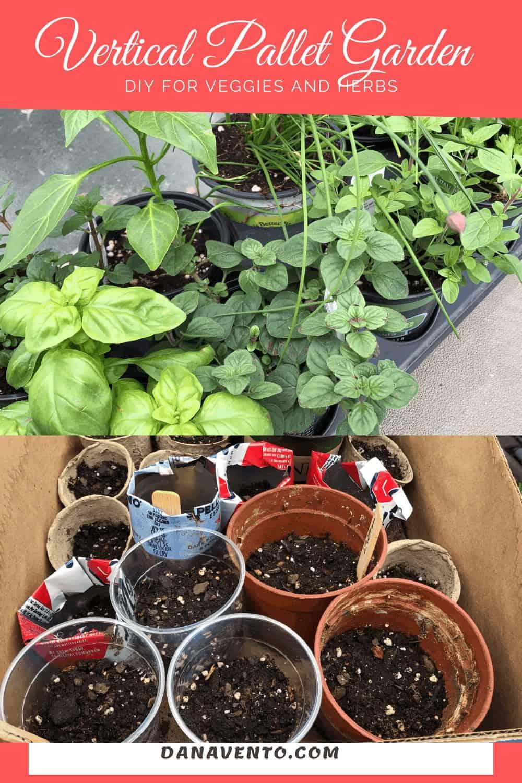 my seedlings for my garden