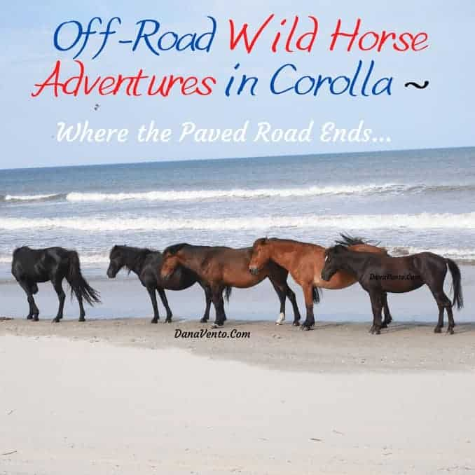 Off-Road Wild Horse Adventures in Corolla – Where the Paved Road Ends
