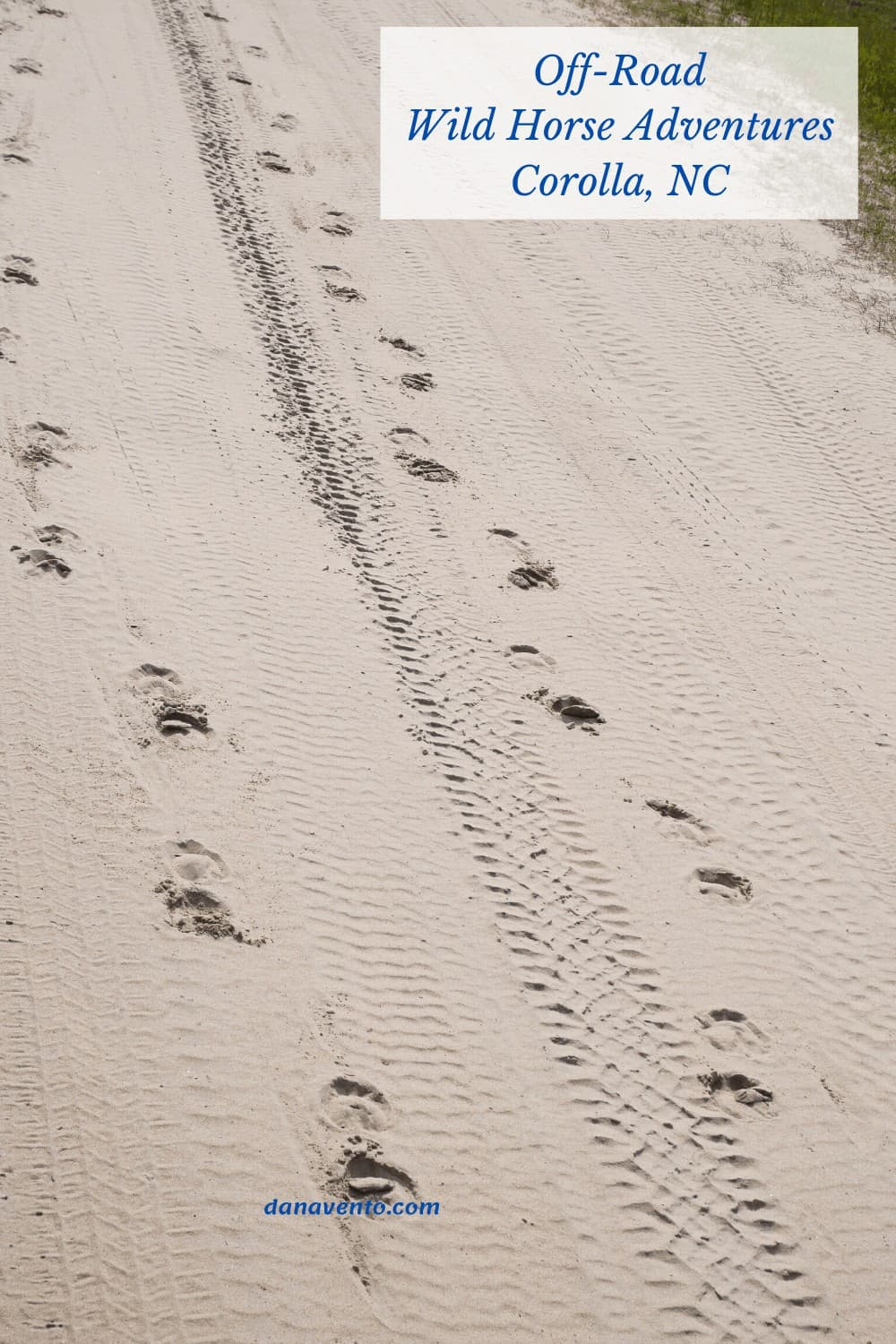 Footprints from the Spanish Colonial Mustangs that run free in the Outer Banks of Carova Beach