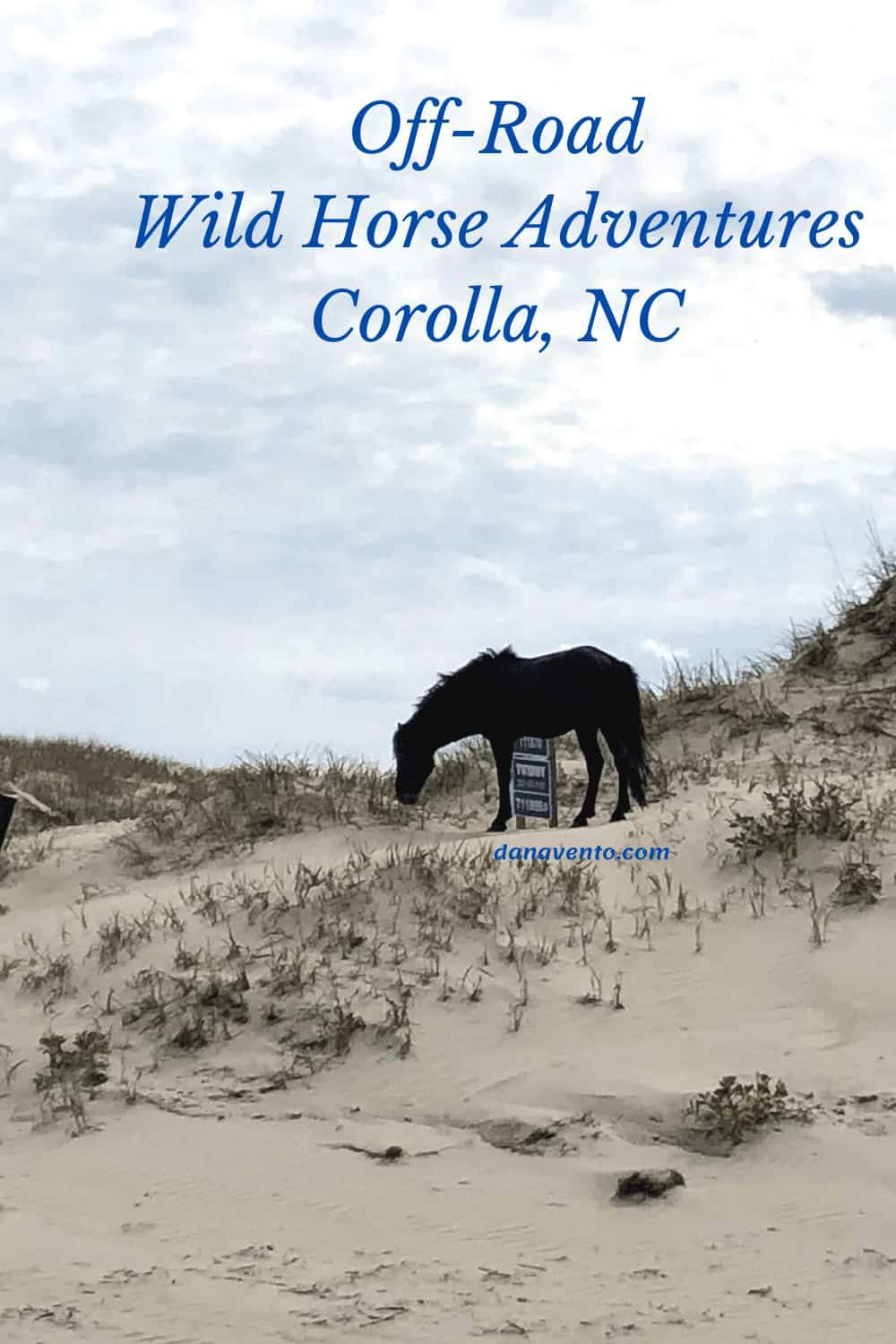 Horse on Sand Dune in Corolla, NC