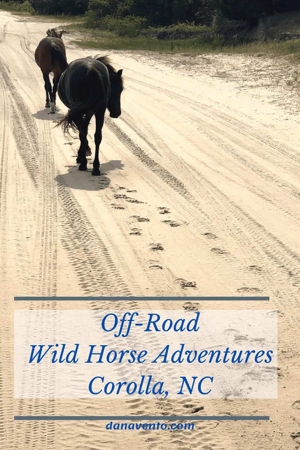 wild horses walking through 4x4 only rental beach home area on road