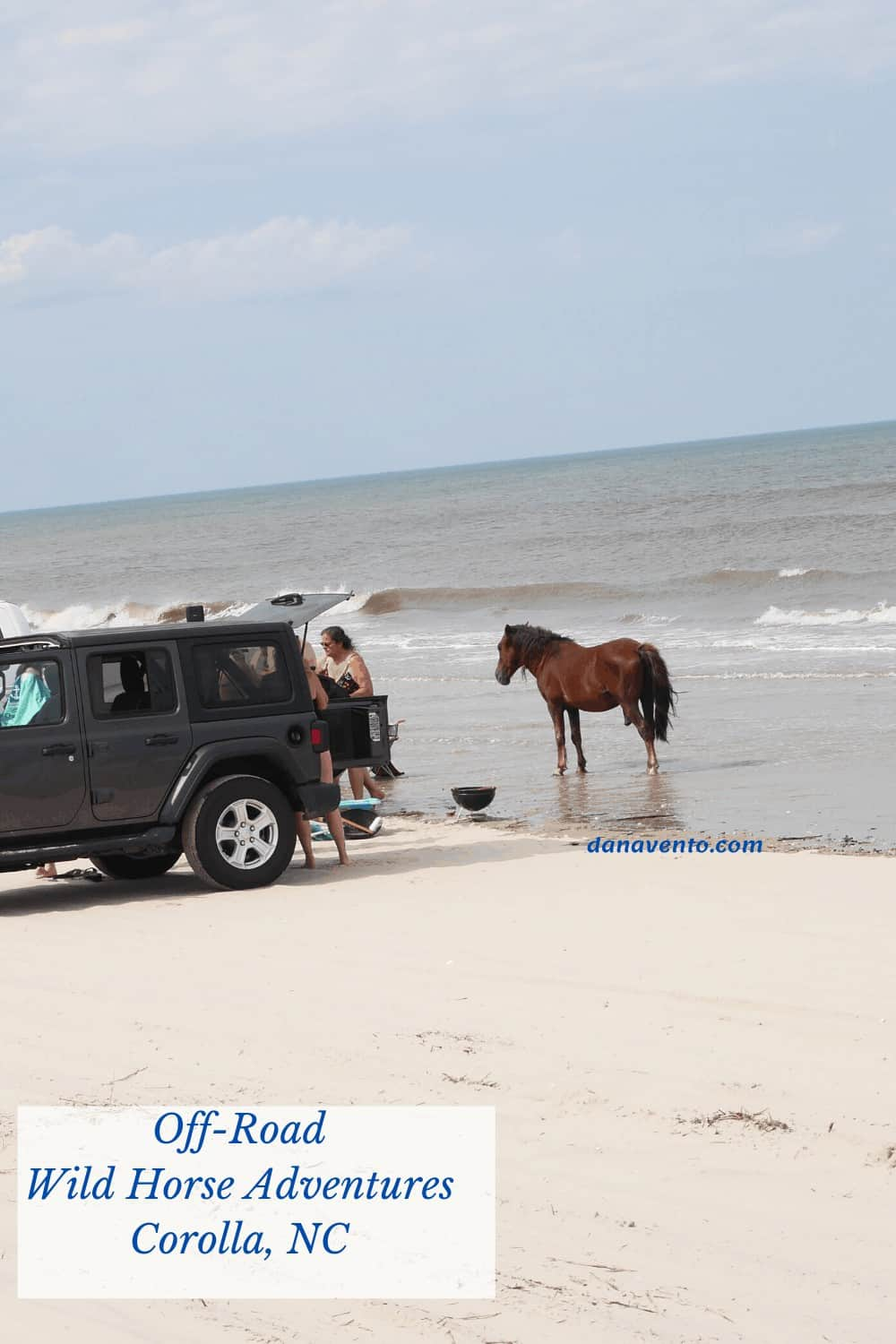 People closer than 50 feet from Spanish Colonial Mustang on Carova Beach in NC