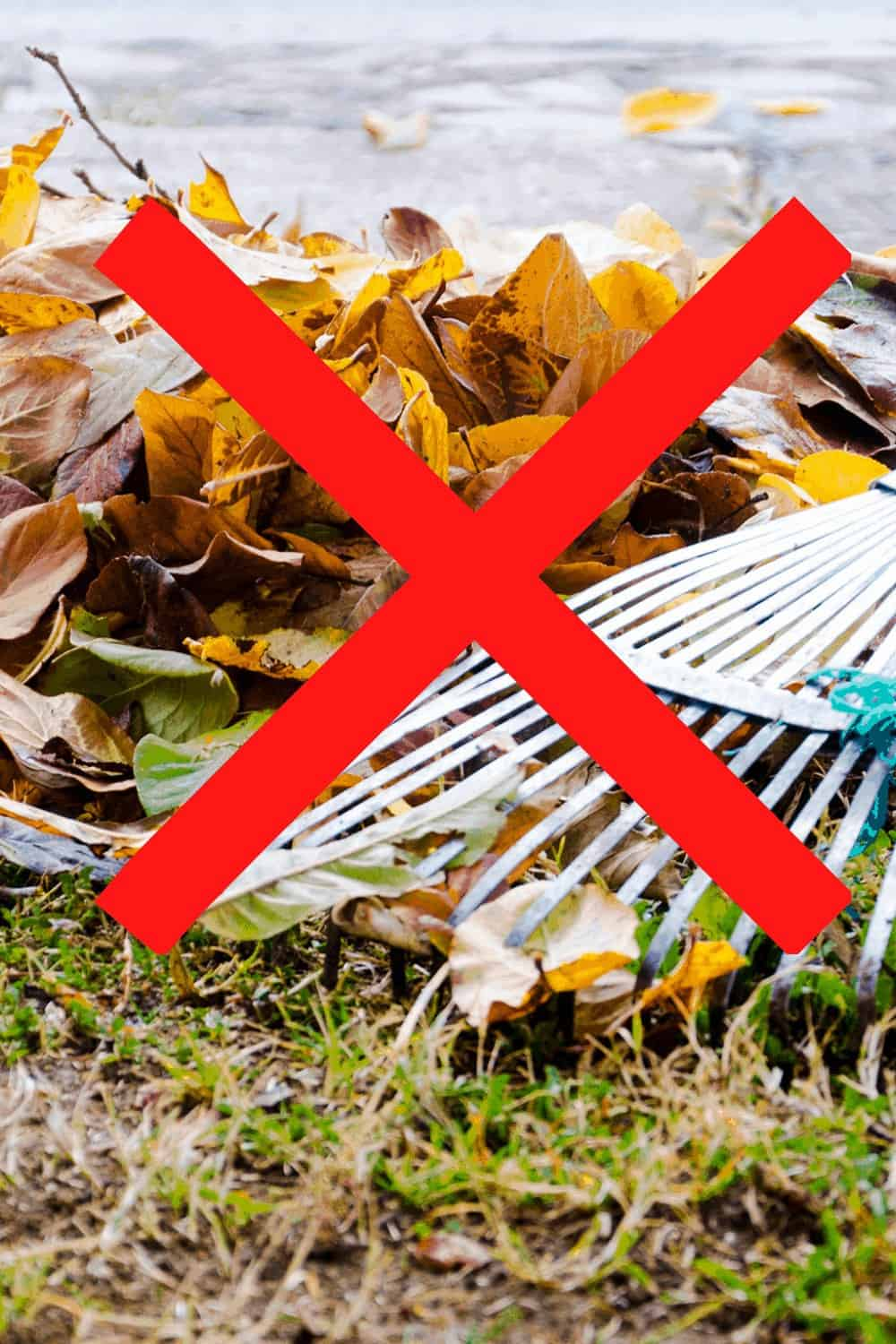 no more rakes for leaves
