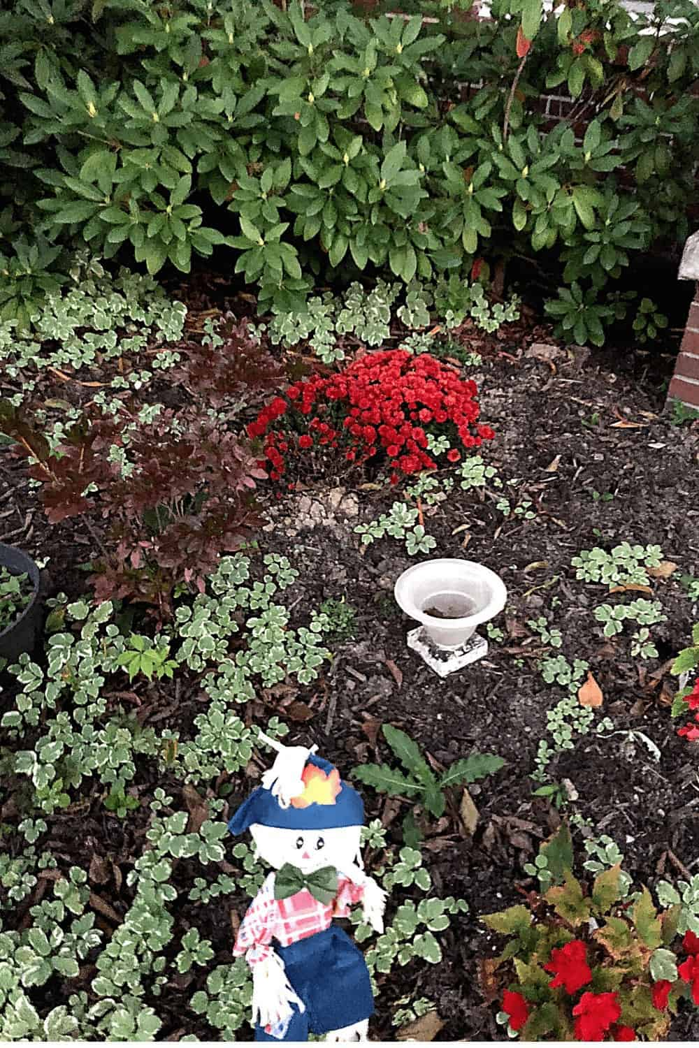 weeds and chrysanthemums