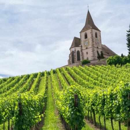 Discover France vineyards