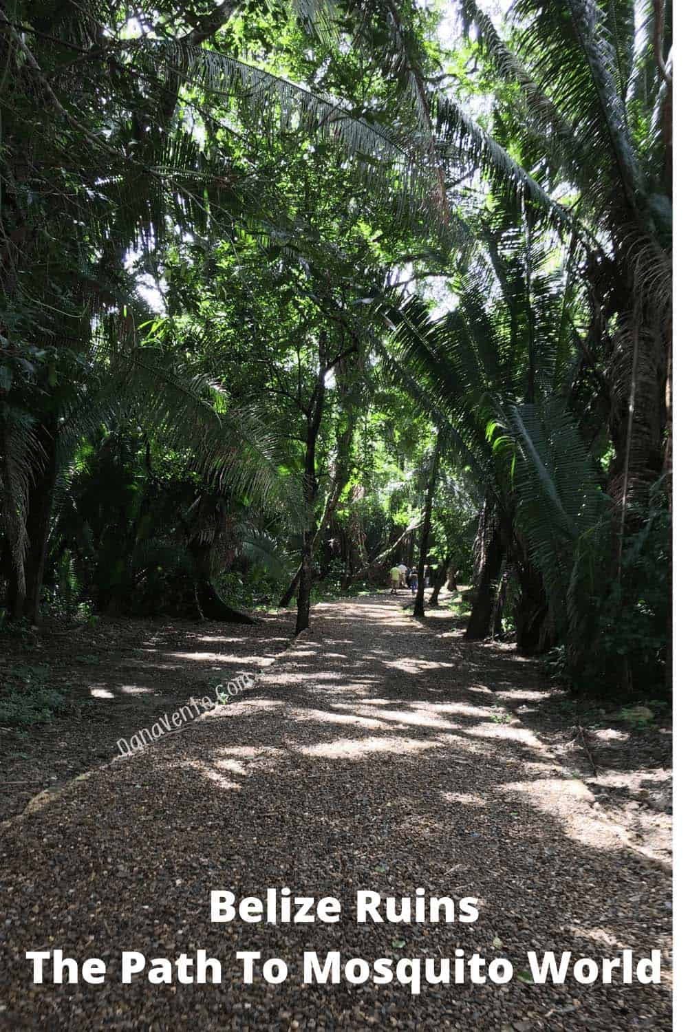 Path To Mosquitoes Belize