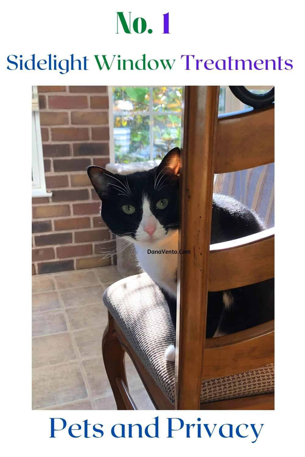 Sidelight Window Treatments for Pets and Privacy Bella sitting in a chair