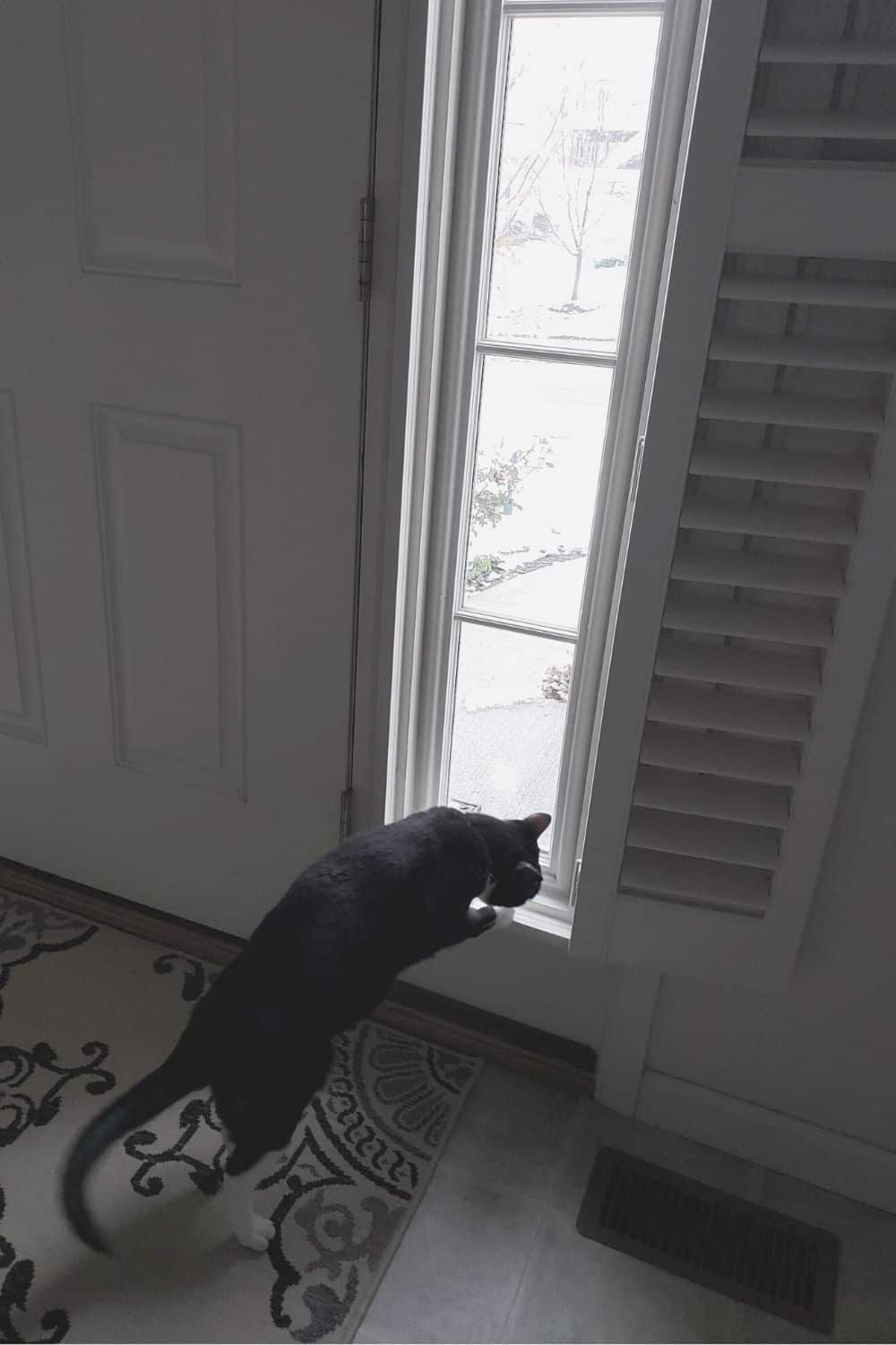 cat at window - sidelight window treatments or pets and privacy