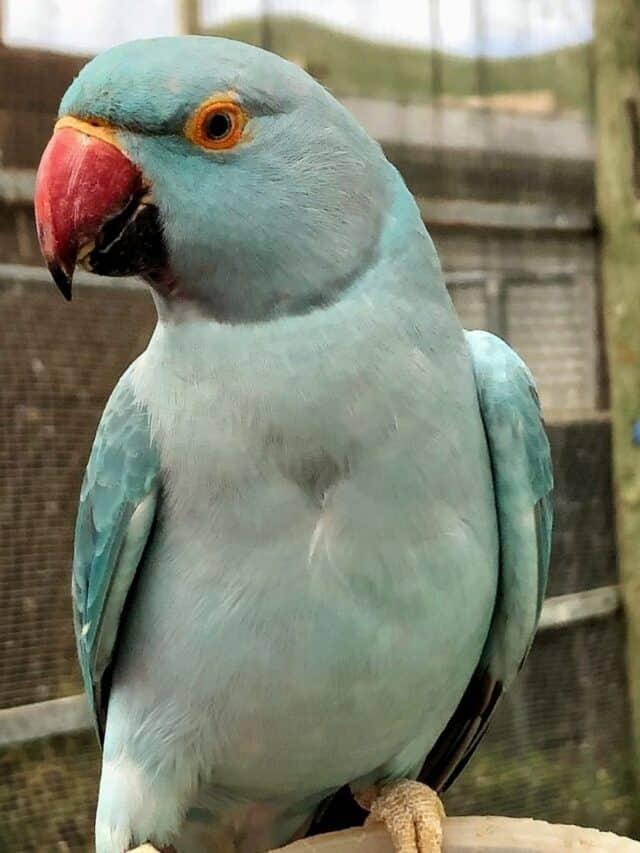St. Maarten's Bird Sanctuary
