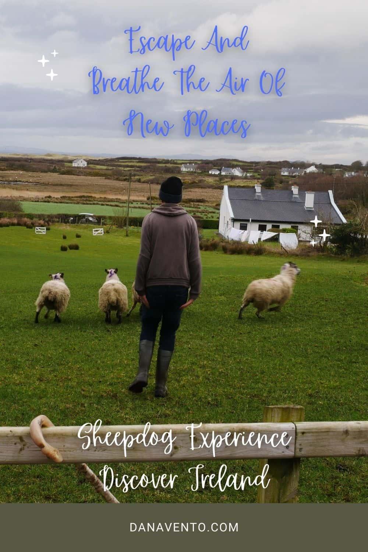 Ireland Sheepdogs